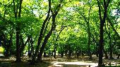 [東京] 9月4日(9/4)  30代40代の動物好き集まれ!井の頭公園&動物園散策コン