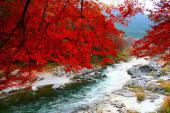 [東京] 12月3日(12/3)  秋がまだ残ってるかも? 都心から1時間ちょっとで行く、鳩ノ巣渓谷 秘境 ウォーキングコン!!