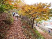 [東京] 12月4日(12/4)  大人の秋遠足!!絶景を楽しむ!奥多摩森林浴&紅葉セラピーハイキングコン