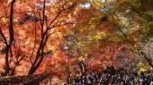 [東京] 12月11日(12/11)  期間限定!最高のロケーション!山登り&出会い!高尾山紅葉ウォーキングコン