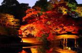 [東京] 12月3日(12/3)  女性満席!30代40代!カップル続出!この時期にしか見れない幻想的な世界!庭園紅葉ライトアップコン!