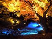 [東京] 12月7日(12/7)  平日に!この時期にしか見れない幻想的な世界!庭園紅葉ライトアップウォーキングコン!