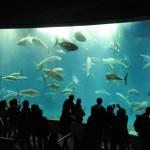 [東京] 1月22日(1/22)  30代40代で大人の遠足!関東一人気の葛西水族館コン!みんなでペンギンを見に行こう