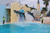 [東京] 3月3日(3/3)  大人の遠足!平日にゆっくりイルカやアシカのショーが楽しめる!水族館見学&公園コン!