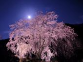 [東京] 4月3日(4/3)  平日に!この時期にしか見れない幻想的な世界!六義園お花見ウォーキングコン!