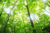 [東京] 4月8日(4/8)  20代限定!お花見しながら絶景を楽しむ!奥多摩森林浴&セラピーハイキングコン