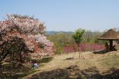 [埼玉] 7月1日(7/1)  男女ペアで山歩きを楽しみながら約4,500株のアジサイを見に行こう!山頂ではすばらしい景色を見ながら ...