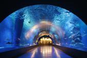 [東京] 9月7日(9/7)  イルカやアシカのショーも楽しめる!しながわ水族館&公園ウォーキング