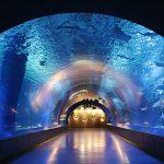 [東京] 9月14日(9/14)  イルカやアシカのショーも楽しめる!しながわ水族館&公園ウォーキング