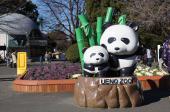 [上野] 10月23日(10/23)  平日休み同士で上野動物園へ!上野動物園ウォーキングコン!