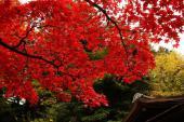 [横浜] 11月23日(11/23)  紅葉狩り!横浜日本庭園ウォーキングコン!