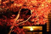 [小金井] 11月25日(11/25)  小金井公園にて期間限定!江戸たてもの園!紅葉ライトアップウォーキングコン♪30代40代コン