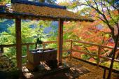 [二子玉川] 11月25日(11/25)  ここが東京なの!?大自然の中でマイナスイオンを浴びよう!等々力渓谷紅葉ウォーキングコン!