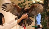 [東京] 12月16日(12/16)  【20代限定企画】貴重な体験!可愛いフクロウと鷹に癒されよう!原宿フクロウ&鷹カフェコン!