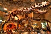 [東京] 12月24日(12/24)  上野で世界遺産を巡ろう!大人遠足!上野美術館&博物館ウォーキングコン!(趣味活)