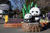 [上野] 1月5日(1/5)  平日休み同士の貴重な出会い!上野動物園に人気のパンダを見に行こう!動物園ウォーキングコン!