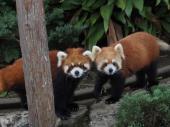 [野毛山] 1月27日(1/27)  野毛山!動物見ながら話題盛りだくさんウォーキングコン!