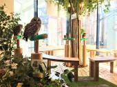 [原宿] 1月13日(1/13)  【25歳〜35歳まで】貴重な体験!可愛いフクロウと鷹に癒されよう!原宿フクロウ&鷹カフェコン!
