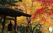 [北鎌倉] 20・30代 紅葉散策♪ ~1人参加・初参加~【北鎌倉】男性3000円・女性500円のイベントです♪