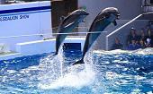 [品川] 20・30代 水族館♪ ~1人参加・初参加~【品川】男性4000円・女性1000円のイベントです♪