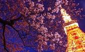 [芝公園] 20・30代 ナイト東京タワー&夜桜♪ ~1人参加~【芝公園】男性4000円・女性1500円のイベントです♪