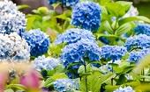 [浜松町] 22~45才(年の差)  ガーデン♪ ~1人参加~【浜松町】男性3500円・女性1000円のイベントです♪