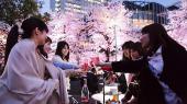 [お台場] 4月9日(日)【お台場*駅近お花見BBQ】恋活婚活100名シーサイドバーベキュー★葛西臨海公園