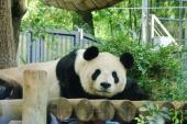 [東京] ★10/29 上野動物園で楽しく恋活・友達作り ★ 自然な出会いはここから ★ カップル報告あり★