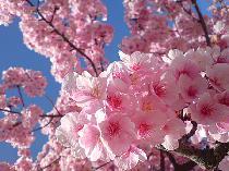 [六本木] 4/3(土) TOKYO TOWER×絶景お花見交流パーティー【六本木 100名】