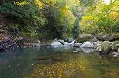 [横浜堂ヶ島] 11月29日(11/29)  紅葉の季節到来~色鮮やかな箱根を堪能!30代40代堂ヶ島渓谷ハイキング