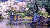 [東京] 4月9日(4/9)  お花見ゆっくり春散歩!由緒ある名所で30代40代水戸光圀(みとみつくに)公ゆかりの小石川後楽園お散歩コン