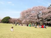 [東京] 5月20日(5/20)  自然豊かな公園と動物たちに癒されながらお散歩しよう!井の頭公園&動物園ウォーキングコン!