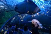 [東京] 7月17日(7/17)  室内で涼しい!大人の遠足!イルカやアシカのショーも楽しめる!水族館見学&公園コン!