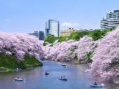 [飯田橋] 4月1日 お花見シーズンに!東京最強パワースポットを巡る!!お花見東京パワースポットウォーキングコン!