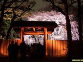 [駒込] 4月1日 期間限定!幻想的な世界を堪能!六義園ライトアップ夜桜ウォーキングコン!