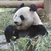 [上野] 7月8日【20代限定企画】上野動物園に人気のパンダを見に行こう!動物園ウォーキングコン!