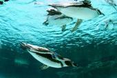 [葛西] 7月15日 涼しい水族館へ!キュートなペンギン達に会いに行こう!葛西水族館見学&公園ウォーキングコン!