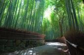 [鎌倉] 7月28日鎌倉で竹藪の中で抹茶を堪能ウォーキングコン!!