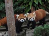 [野毛] 8月5日 夜の野毛山!動物見ながら話題盛りだくさんナイトウォーキングコン!
