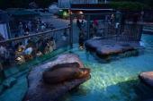 [上野動物園] 8月13日動物好き!上野動物園に人気のパンダを見に行こう!動物園ウォーキングコン!
