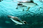[葛西] 8月15日 キュートなペンギン達に会いに行こう!葛西水族館見学コン