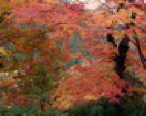 [東京都、奥多摩] ★★【STYLE】★★2012/11/11(日)今季last!素晴らしい紅葉の中、BBQparty!【奥多摩】