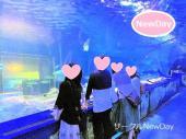 ★8/1 新江ノ島水族館の散策コン ★ 楽しい散策イベント開催中!★