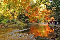 [千葉] 紅葉真っ盛り!養老渓谷ハイキング&温泉