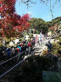 [鎌倉市] 2月15日天園ハイキングコース(鎌倉アルプス)を歩こう!!