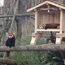 [横浜] 横浜で動物園を満喫から始まる婚活!!   男性満員! 女性あと2名!!