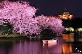 [横浜市] 横浜・重要文化財『三溪園』!!~お花見ウォーキングコン~