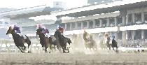 [大井町] 競馬観戦パーティ!みんなで決めた数字で馬券を購入!光輝くトゥインクルレースで運命に勝て!