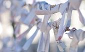 [飯田橋] 20・30代 年末詣♪ ~1人参加・初参加~【飯田橋】男性3000円・女性無料のイベントです♪