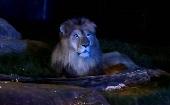 [多摩] 20~40才(年の差) ナイト動物園♪ ~1人参加~【多摩】